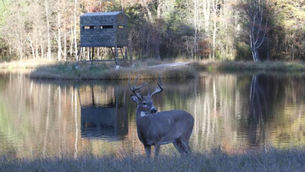Deer blinds standley feed and seed for Best deer blinds
