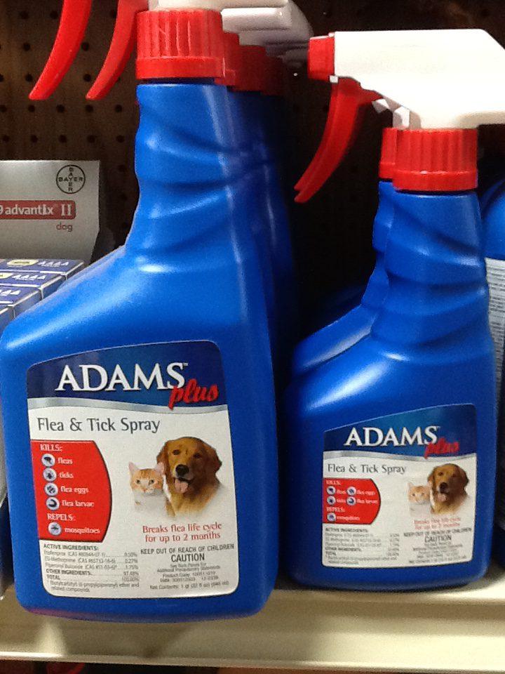 Adam's Flea