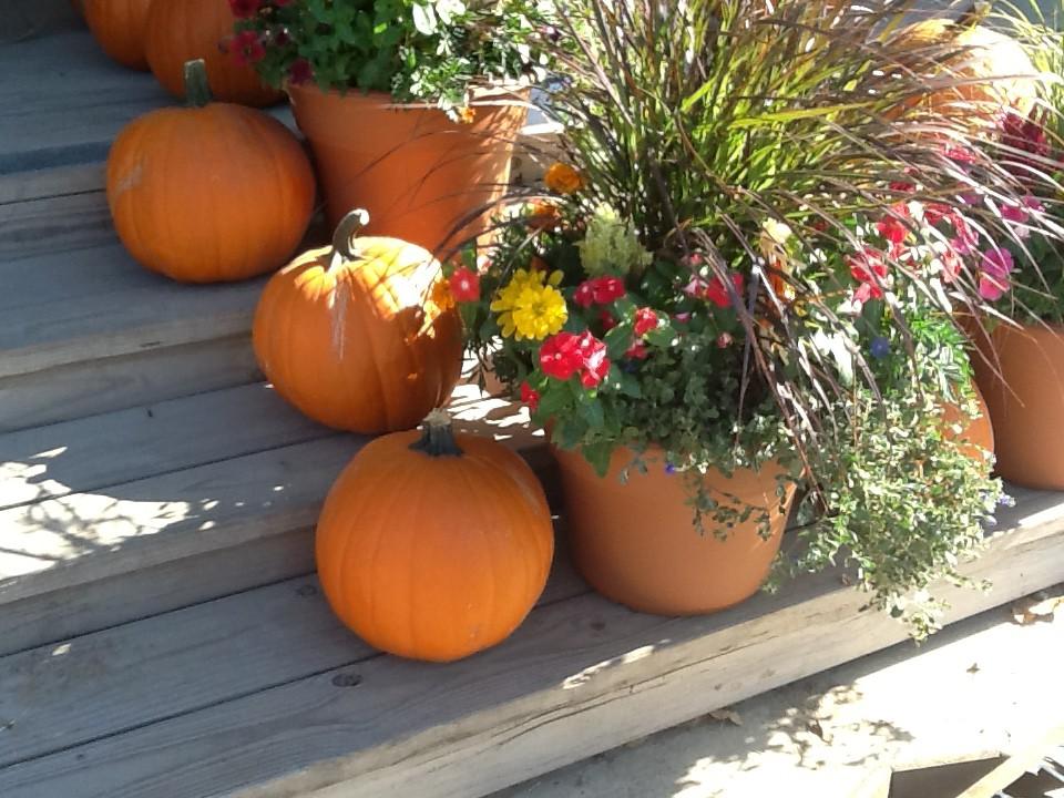 Paul's Garden Blog
