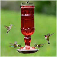 unique hummingbird feeders