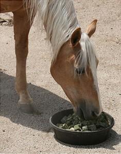 Adobestock_Horse eating pellets_1019251105