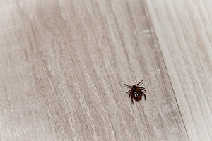 how to get rid of chiggers in your home