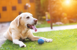 Pet and Animal Safety | Standley Feed