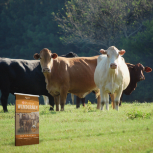 Cattle Mineral Quick Tips
