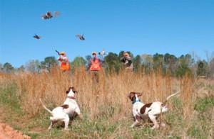 quail_hunting