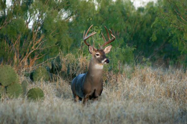 Premium Deer Attractants