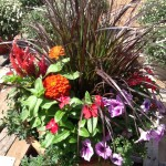 Mums and Garden Dishes