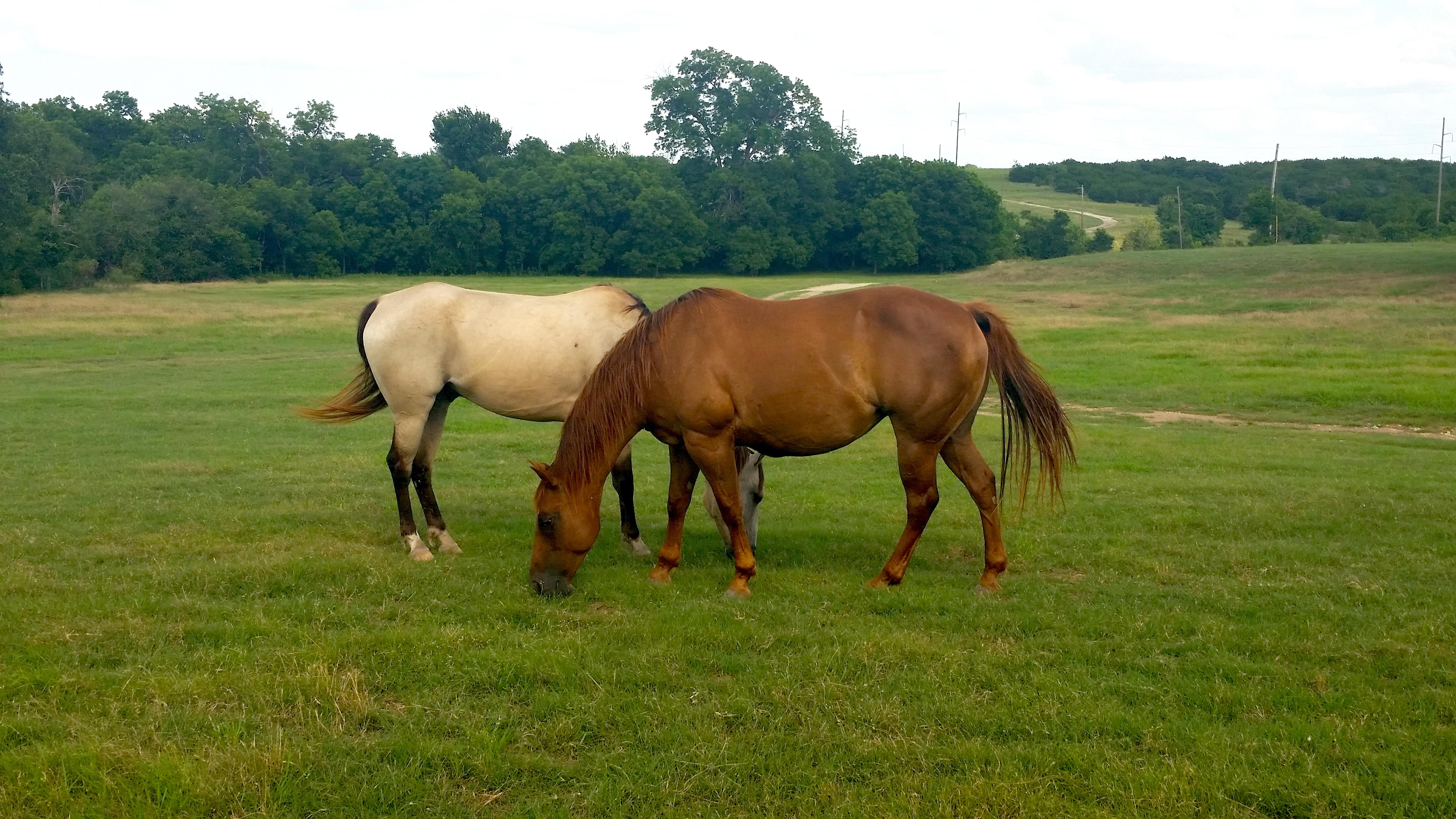 deworming horses