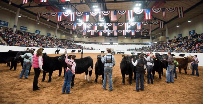 2017 - 2018 Livestock Shows