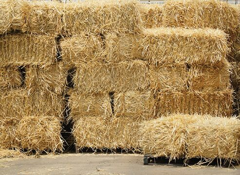 Hay And Shavings Standley Feed And Seed